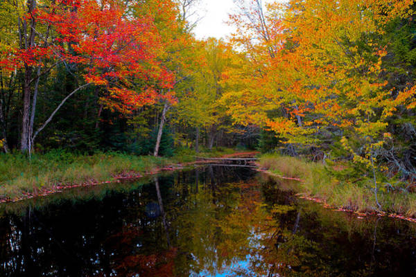 Photograph - Stream Through The Golf Course by David Patterson