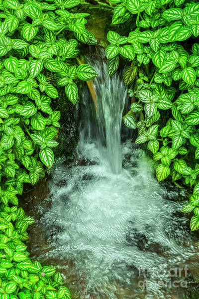 Wall Art - Photograph - Streaming In The Green by Helga Koehrer-Wagner