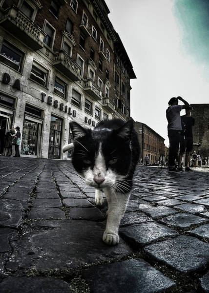 Street Photograph - Street Cat by Nicklas Gustafsson