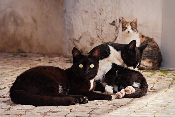 Photograph - Street Cats - Portugal by Barry O Carroll