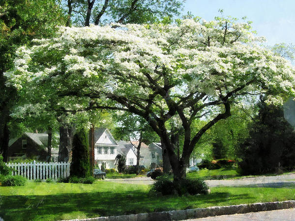 Photograph - Street With Dogwood by Susan Savad