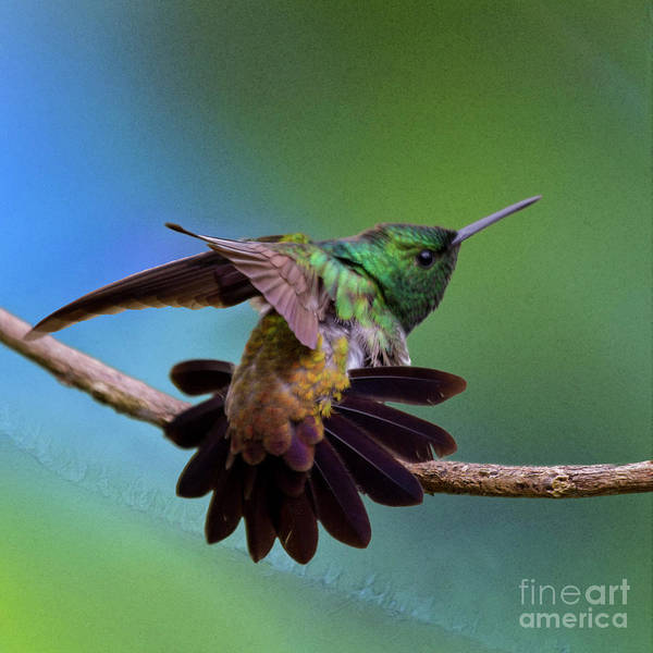 Photograph - Stretching Exercise by Heiko Koehrer-Wagner