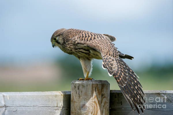 Photograph - Stretching by Torbjorn Swenelius