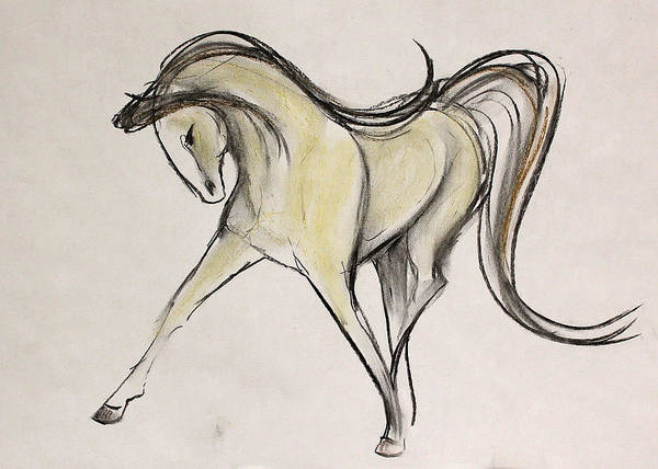 Warmbloods Drawing - Stretchy Sketch by Jennifer Fosgate