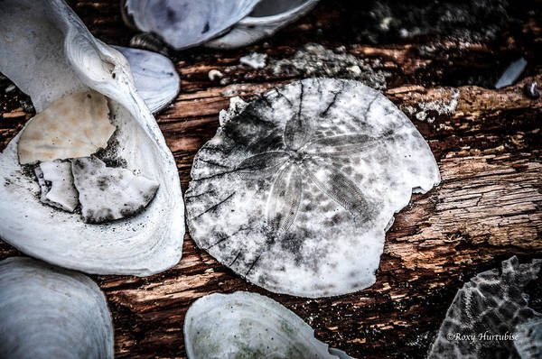 Photograph - Strewn About by Roxy Hurtubise