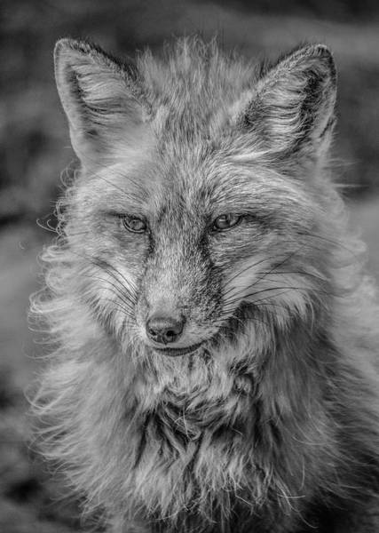 Photograph - Striking A Pose Black And White by Teresa Wilson