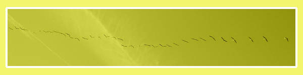 Photograph - String Of Birds In Yellow by Mary Mikawoz