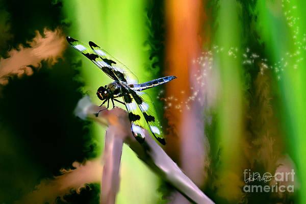 Striped Dragonfly Art Print