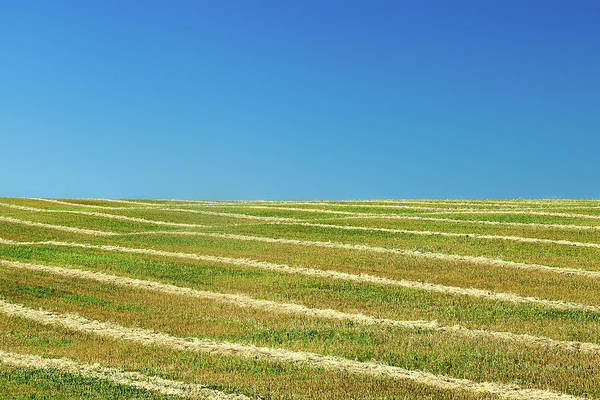 Photograph - Striped Field by Todd Klassy