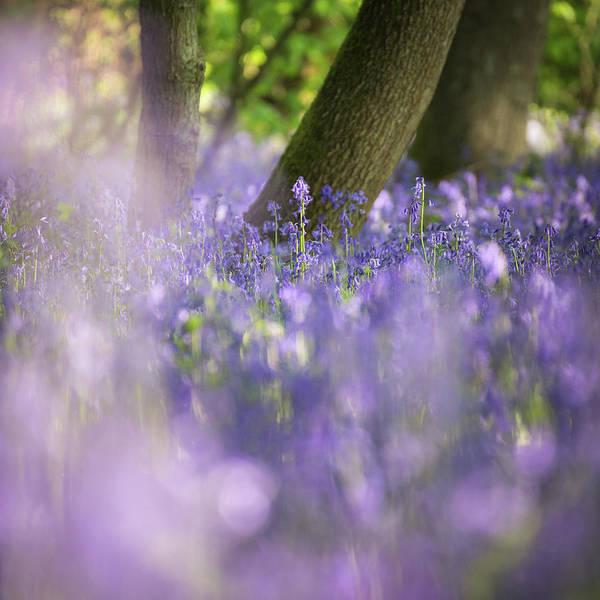 Nottinghamshire Photograph - Striving by Chris Dale