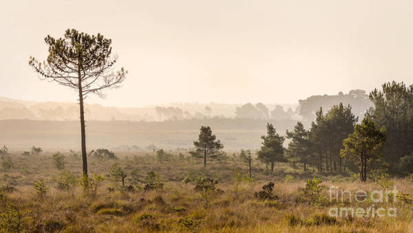 Wall Art - Photograph - Strodgemoor Bottom New Forest by Richard Thomas