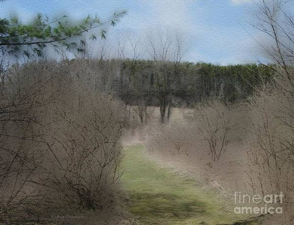 Photograph - Stroll Through The Woods by Kathie Chicoine
