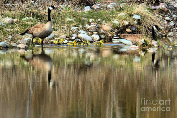 Photograph - Strolling Along The Bank by Adam Jewell