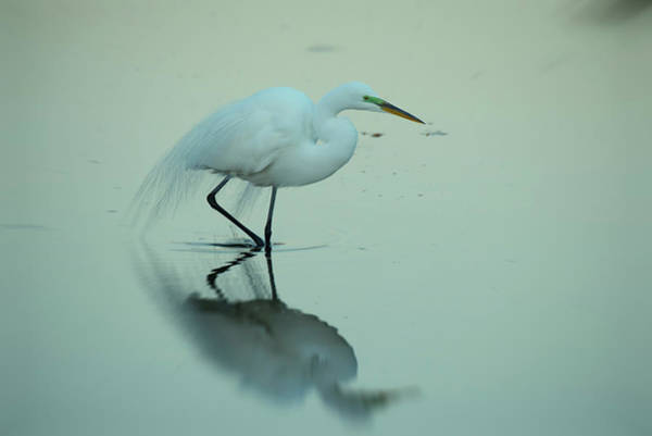 The Rookery Wall Art - Photograph - Strolling The Shallows by Don Columbus