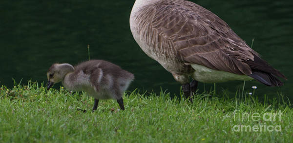Photograph - Strolling With Mom by Dale Powell