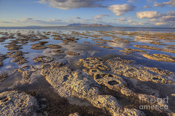 Photograph - Stromatolites And Antelope Island by Spencer Baugh
