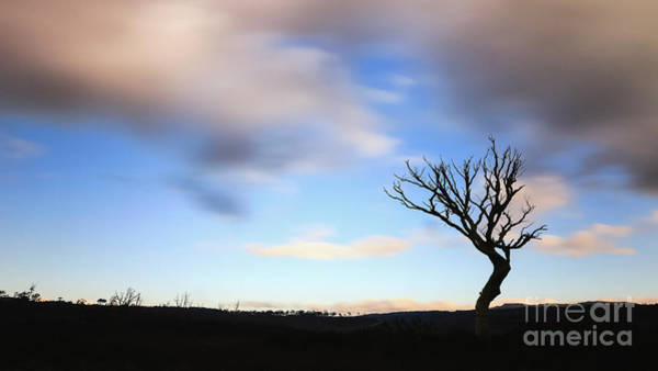 Tree Silhouette Photograph - Stronger by Evelina Kremsdorf