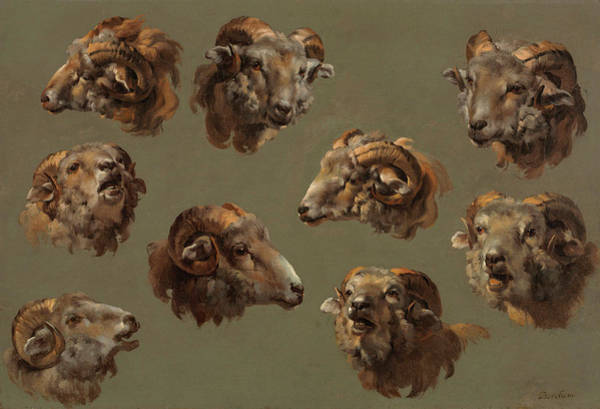 Ram Painting - Studies Of Ram Heads by 18th Century