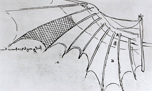 Drawing - Studies Of Wing Articulation by Leonardo Da Vinci
