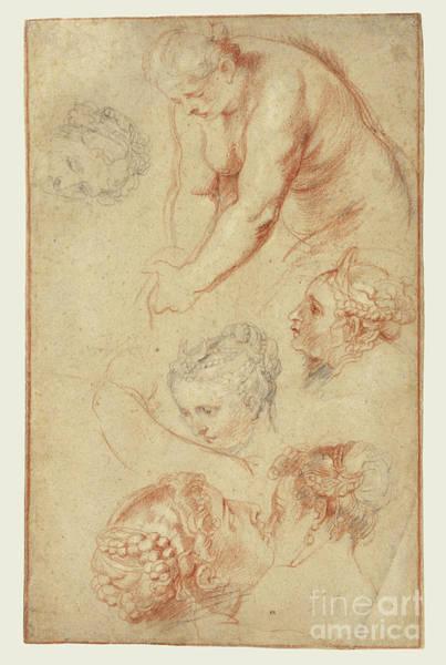 Dali Painting - Studies Of Women By Peter Paul Rubens by Esoterica Art Agency