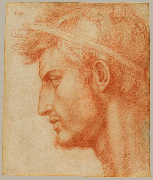 Drawing - Study For The Head Of Julius Caesar by Andrea del Sarto