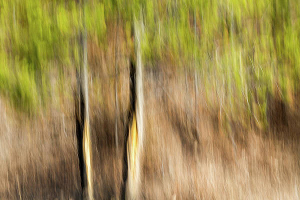 Wall Art - Photograph - Study In Abstract No. 14, Yellowstone by Ann Skelton