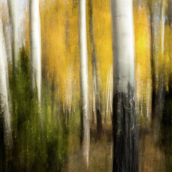Wall Art - Photograph - Study In Abstract No. 197s, Yellowstone  by Ann Skelton