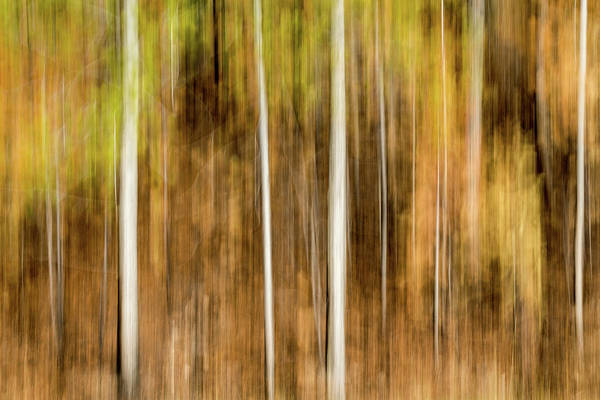 Wall Art - Photograph - Study In Abstract No. 244, Yellowstone by Ann Skelton