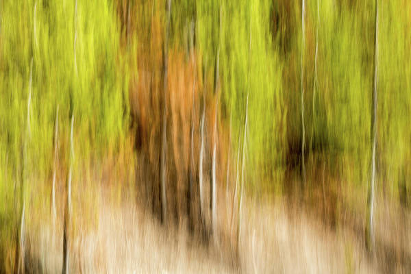 Wall Art - Photograph - Study In Abstract No. 247, Yellowstone by Ann Skelton