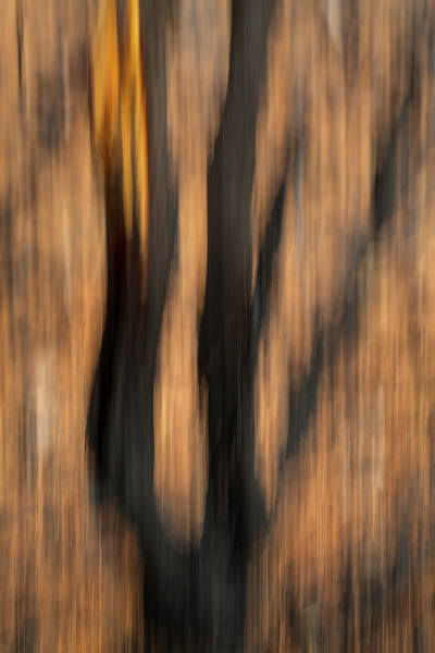 Wall Art - Photograph - Study In Abstract No. 3, Yellowstone by Ann Skelton