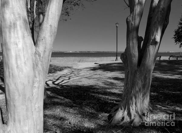 Photograph - Study In Black And White by Rosanne Licciardi