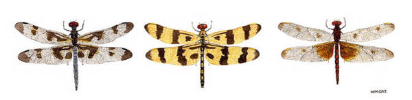 Study Of A Banded Pennant A Halloween Pennant And A Calico Pennant  Art Print