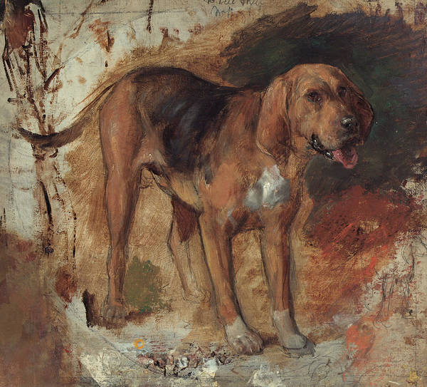 Painting - Study Of A Bloodhound by William Holman Hunt