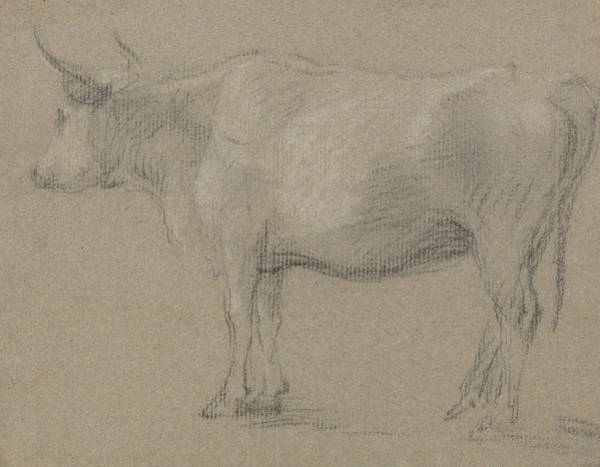 Drawing - Study Of A Cow by Thomas Gainsborough
