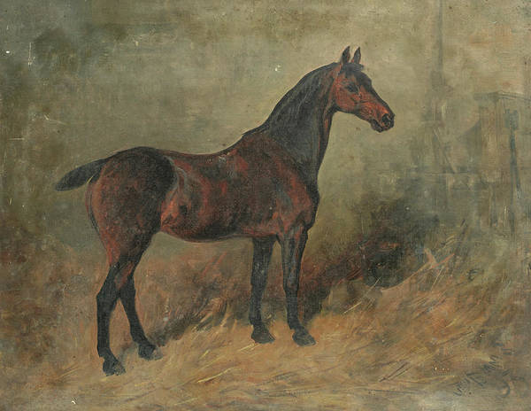 Herd Of Horses Wall Art - Painting - Study Of A Horse by John Emms