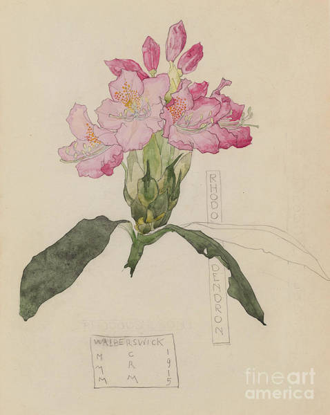 Petals Drawing - Study Of A Rhododendron, 1915 by Charles Rennie Mackintosh