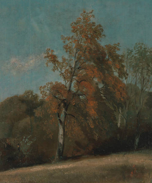 Painting - Study Of An Ash Tree by John Constable