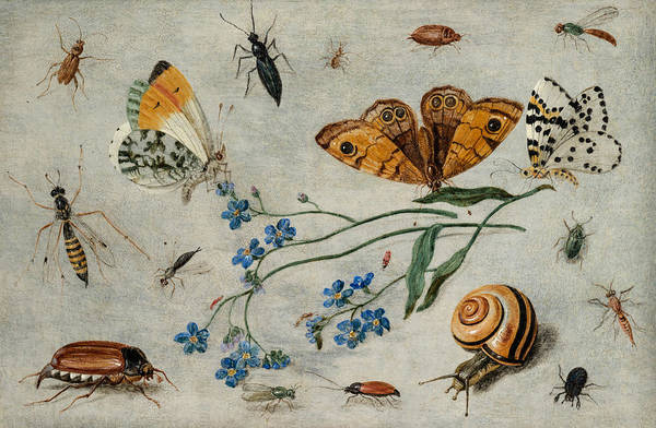 The Elder Painting - Study Of Insects, Butterflies And A Snail With A Sprig Of Forget-me-nots by Jan van Kessel The Elder