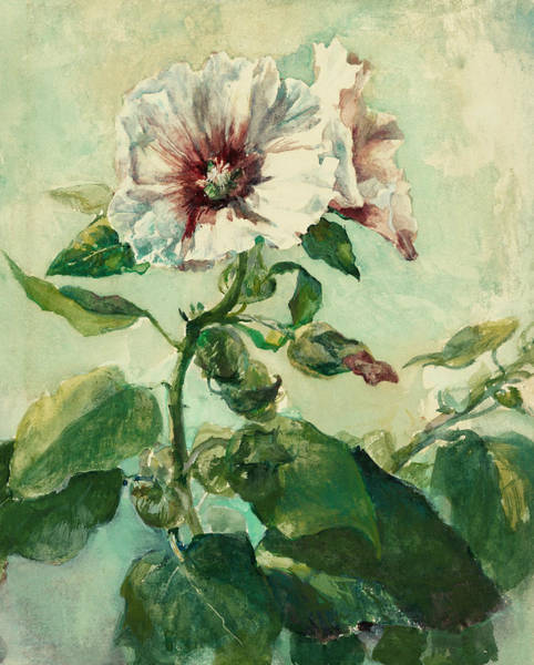 Wall Art - Drawing - Study Of Pink Hollyhocks In Sunlight, From Nature by John La Farge