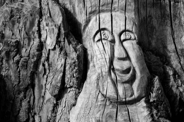 Photograph - Stump Face 3 by Stephen Holst