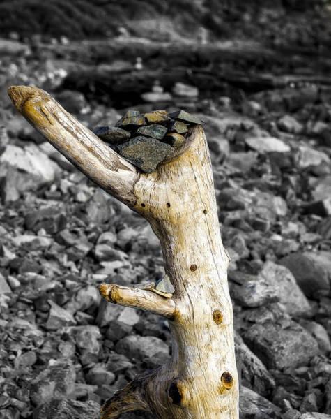 Photograph - Stump With Rocks - Ogunquit - Maine by Steven Ralser