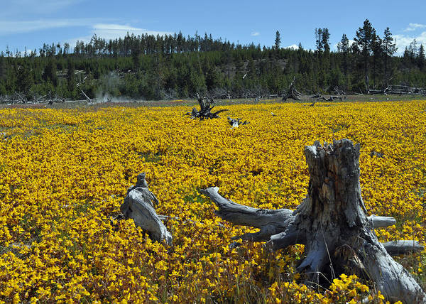 Photograph - Stumped In A Sea Of Yellow Flowers by Bruce Gourley
