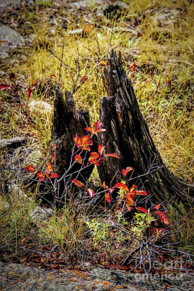 Photograph - Stumpy by Jon Burch Photography