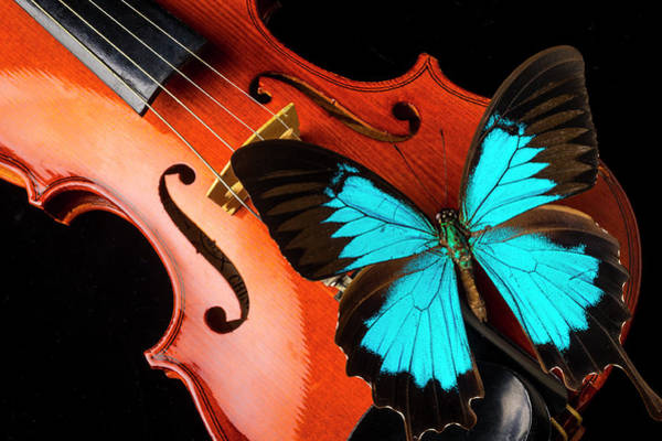Wall Art - Photograph - Stunning Blue Butterfly On Violin by Garry Gay
