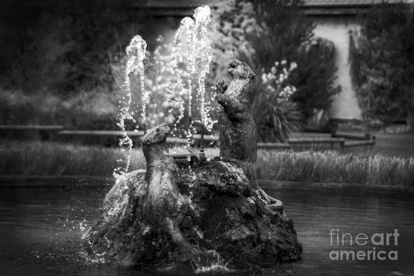 Photograph - Stunning Chester Zoological Gardens by Doc Braham
