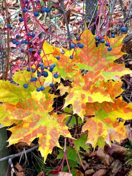 Okanagan Valley Digital Art - Stunning October by Will Borden