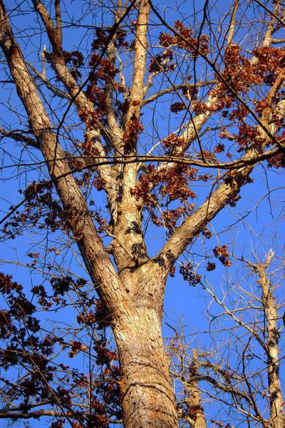 Photograph - Stunning Tree by Buddy Scott