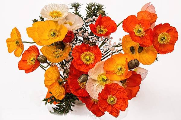 Stunning Vibrant Yellow Orange Poppies  Art Print