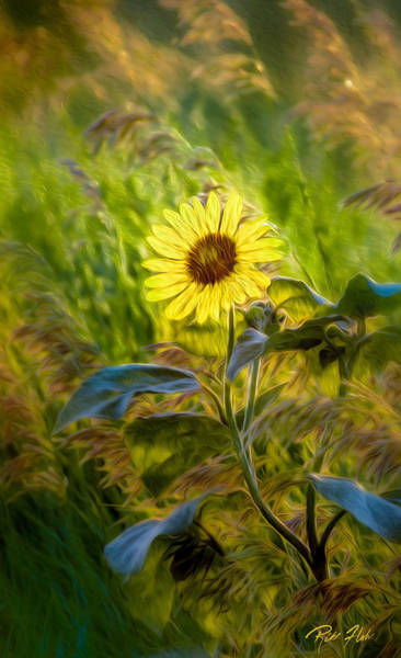 Photograph - Stylized Sunflower by Rikk Flohr