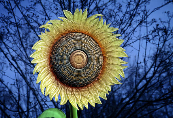 Flower Head Photograph - Stylized Sunflower by Tom Mc Nemar